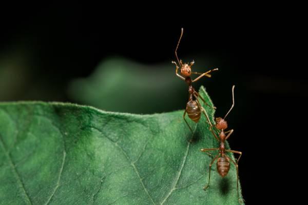 Desinsetização RJ - desinsetização contra formigas